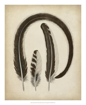 https://imgc.allpostersimages.com/img/posters/vintage-feathers-iii_u-L-F6588K0.jpg?artPerspective=n