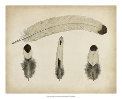 https://imgc.allpostersimages.com/img/posters/vintage-feathers-v_u-L-F658A10.jpg?artPerspective=n