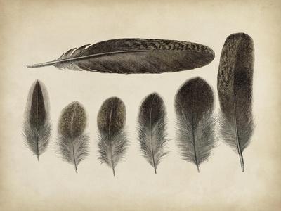 https://imgc.allpostersimages.com/img/posters/vintage-feathers-vi_u-L-PNK4PF0.jpg?artPerspective=n