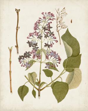 Vintage Flowering Trees II by 0 Unknown