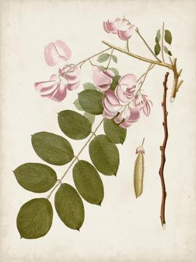 Vintage Flowering Trees VIII by 0 Unknown