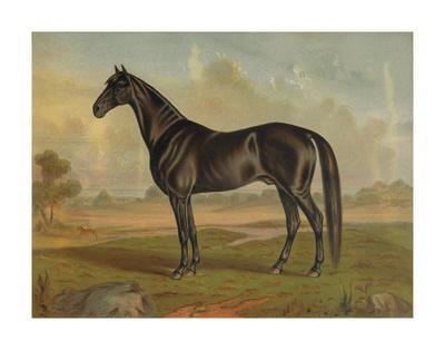 America's Renowned Stallions, c. 1876 II