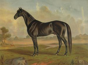 America's Renowned Stallions, c. 1876 II by Vintage Reproduction
