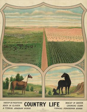 Country Life, c. 1904 by Vintage Reproduction