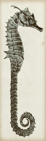 Vintage Seahorse II