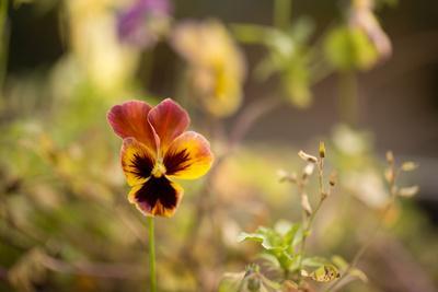 https://imgc.allpostersimages.com/img/posters/violet-autumn-garden_u-L-Q1EXTK80.jpg?artPerspective=n