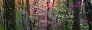 Virginia, Shenandoah National Park