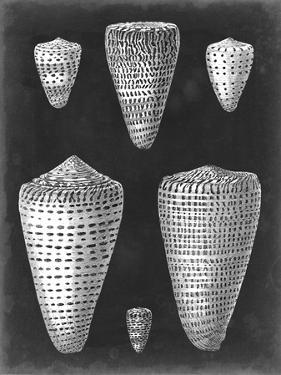 Alabaster Shells I by Vision Studio