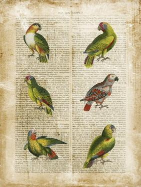 Antiquarian Parrots II by Vision Studio