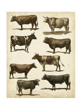 Antique Cow Chart by Vision Studio