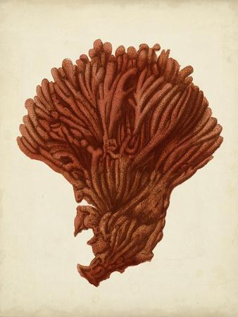 Antique Red Coral I