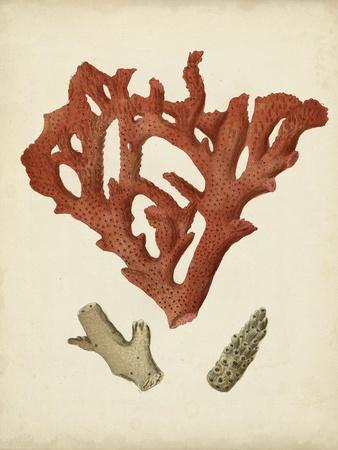 Antique Red Coral II