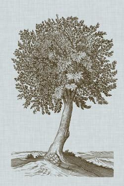 Antique Tree in Sepia I by Vision Studio