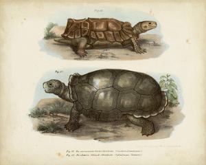 Antique Turtle Pair I by Vision Studio