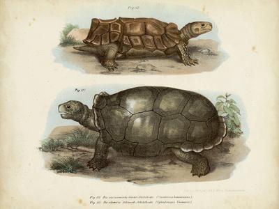 Antique Turtle Pair I