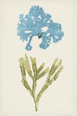 Aqua & Citron Coral III by Vision Studio
