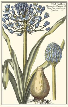 Botanical Beauty II by Vision Studio