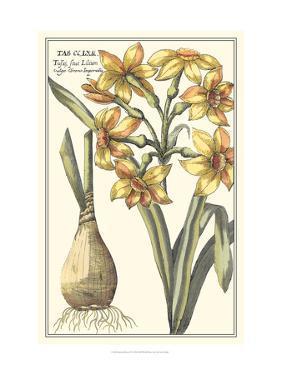 Botanical Beauty IV by Vision Studio