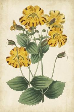 Botanical Display I by Vision Studio