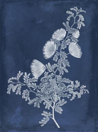 Botanical in Indigo IV by Vision Studio