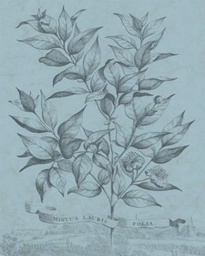 Botanical on Teal I by Vision Studio