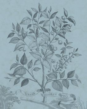 Botanical on Teal V by Vision Studio