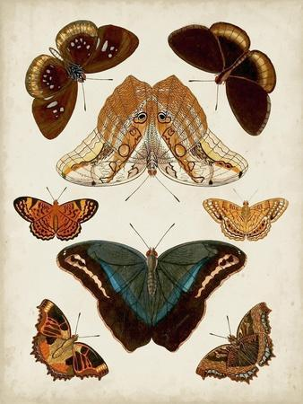 Butterflies Displayed II