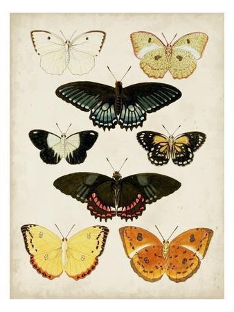 Butterflies Displayed III