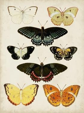 Butterflies Displayed III by Vision Studio