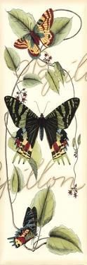 Butterfly Flight II by Vision Studio