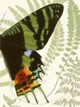 Butterfly Symmetry II by Vision Studio