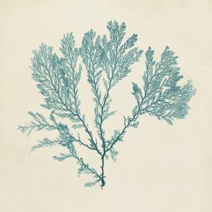 Chromatic Seaweed VIII by Vision Studio