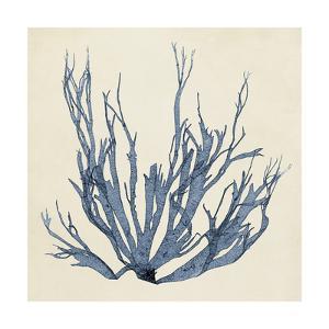 Coastal Seaweed I by Vision Studio
