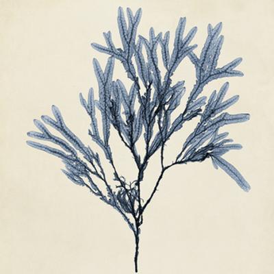 Coastal Seaweed VIII