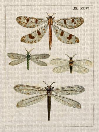 Dragonfly Study I by Vision Studio