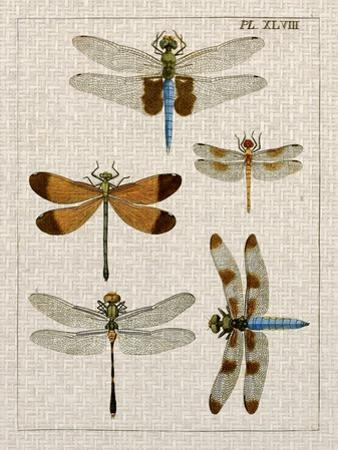 Dragonfly Study II by Vision Studio