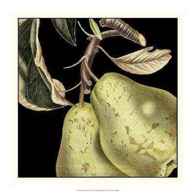 Dramatic Pear by Vision Studio