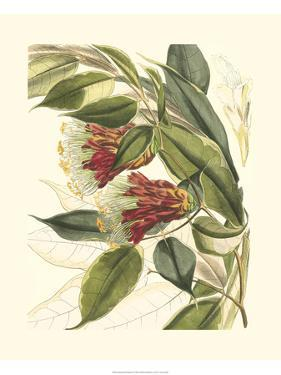 Fantastical Botanical II by Vision Studio