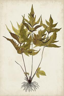 Fern Botanical II by Vision Studio