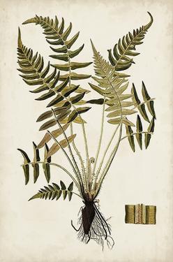 Fern Botanical IV by Vision Studio