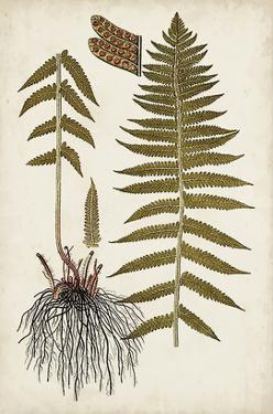 Fern Botanical V by Vision Studio