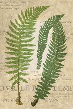Fern Folio III by Vision Studio