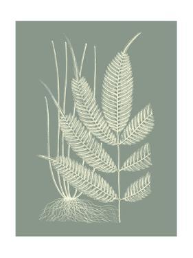 Ferns on Sage II by Vision Studio