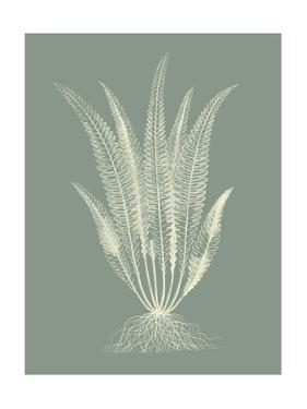Ferns on Sage IV by Vision Studio