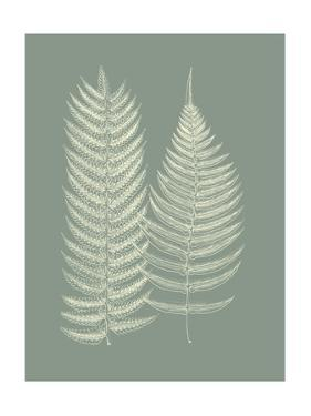 Ferns on Sage IX by Vision Studio