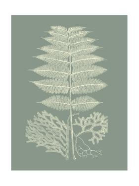 Ferns on Sage V by Vision Studio