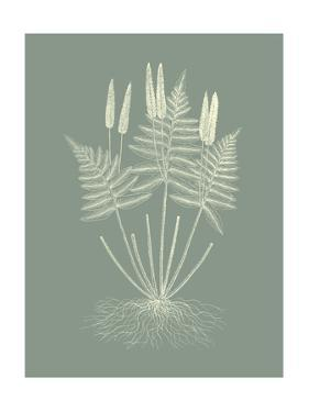 Ferns on Sage VII by Vision Studio