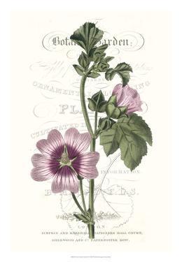 Flower Garden Varietals IV by Vision Studio