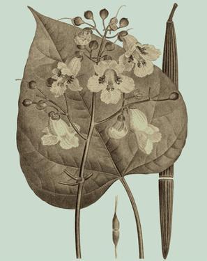 Flowering Trees II by Vision Studio