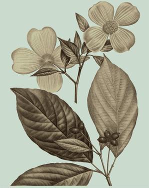 Flowering Trees III by Vision Studio